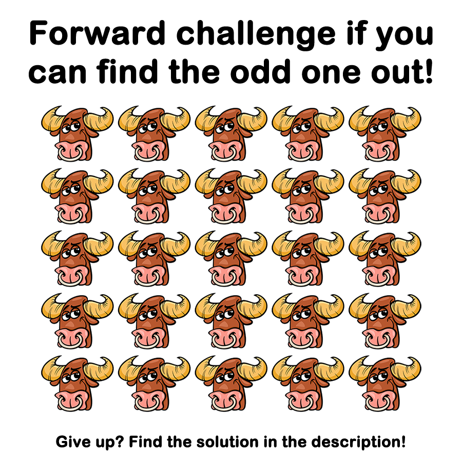 BrainDare.com - Can you find the odd one out? |Hampsters The Odd Ones Out